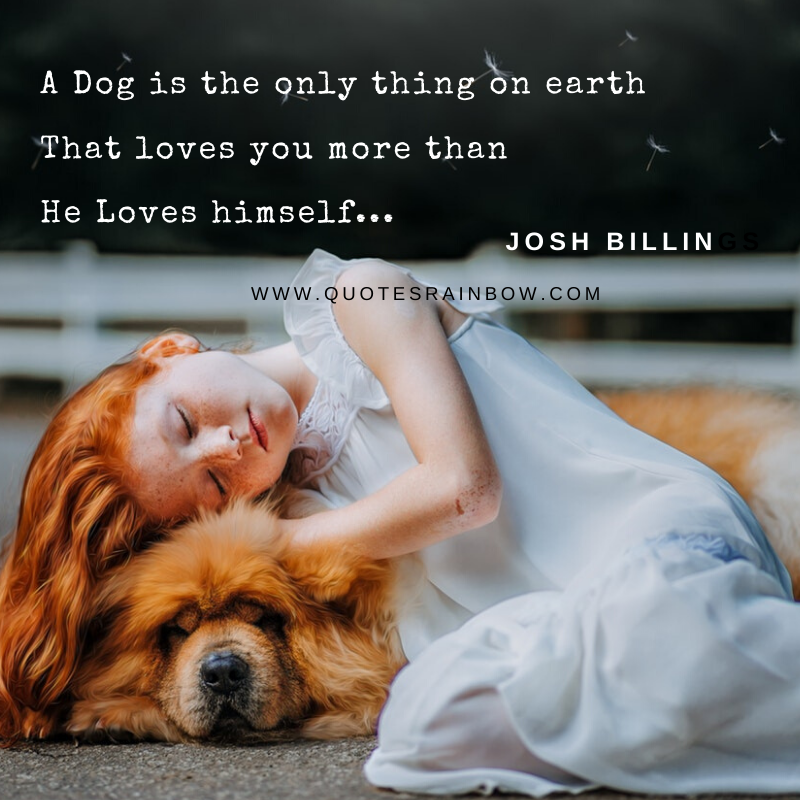 Dog loves you more than himself quotes