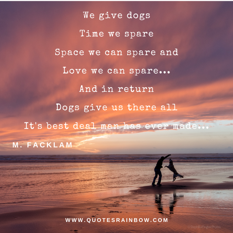 Dogs give us there all quotes