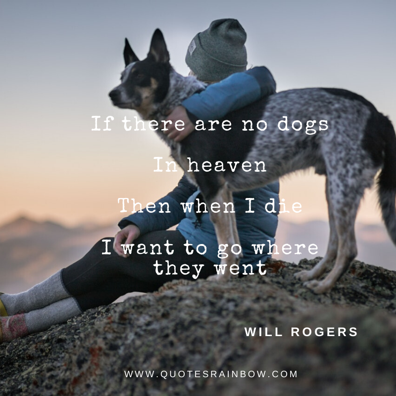 I want to go where my dog went quotes