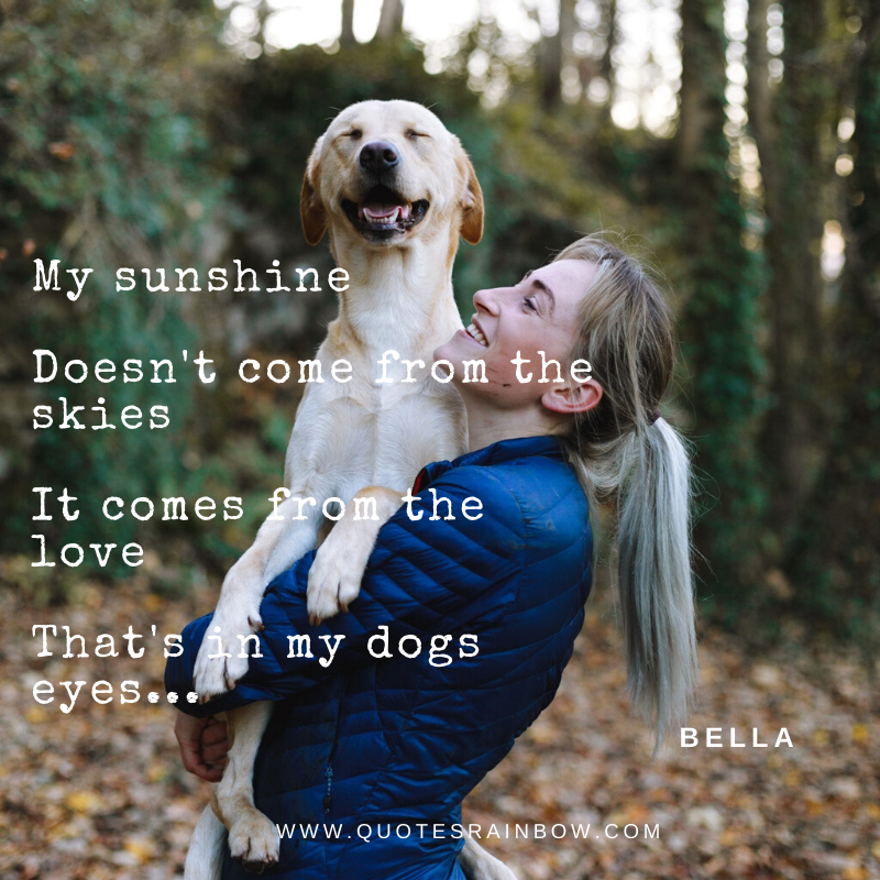 My sunshine dog quotes