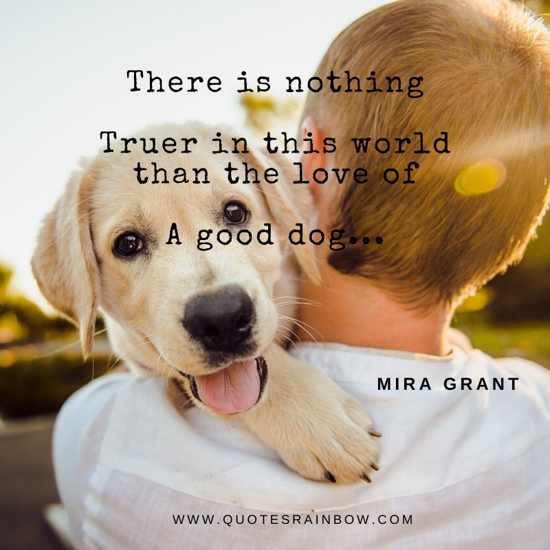 True love of dog quotes