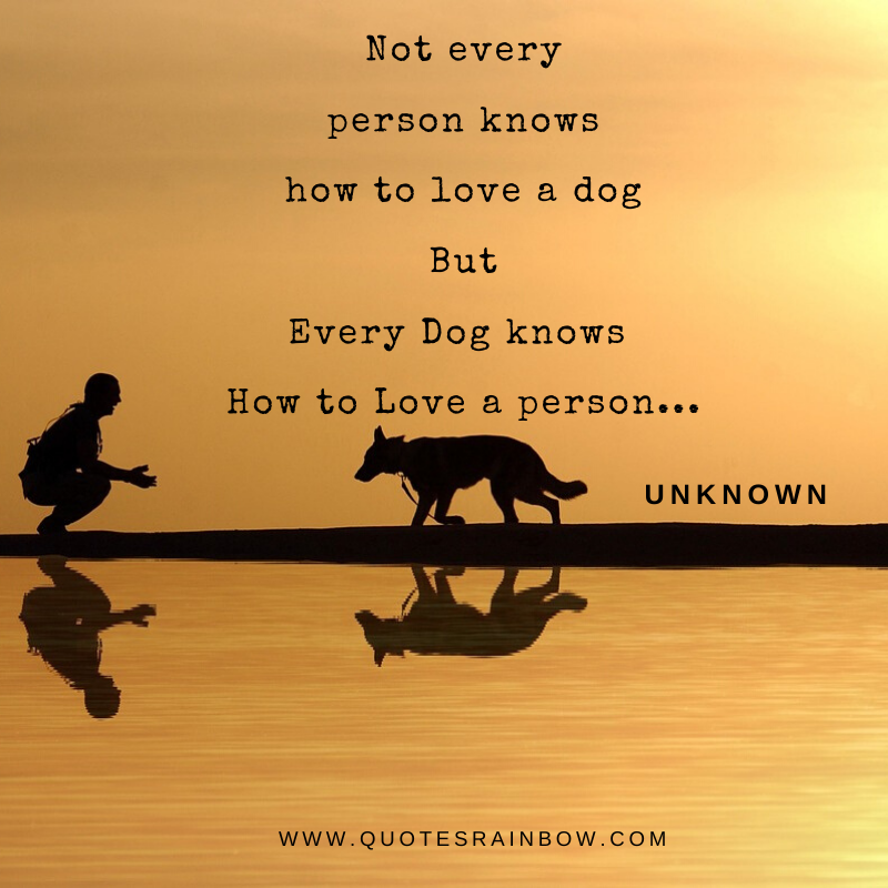 How dog love a person quotes